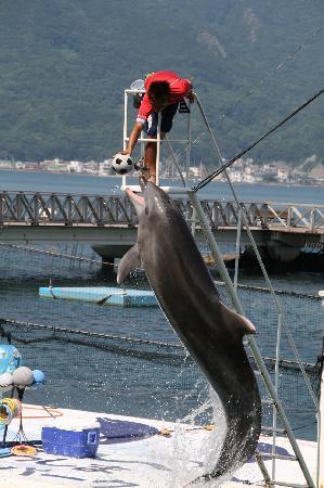 Awashima Marine Park: トレーナーとの息もぴったり