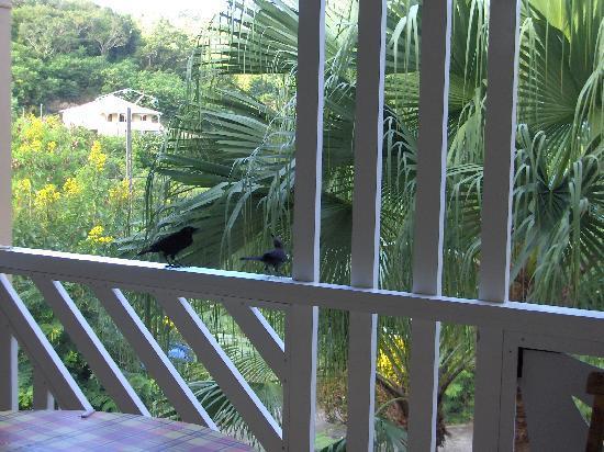 Le Hameau de Beauregard: Balcon repas avec oiseaux