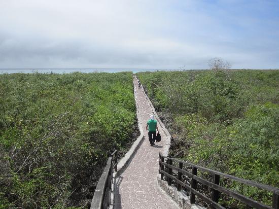 Puerto Ayora, Ecuador: sensero hacia Tortuga Bay