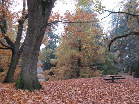 Laurelhurst Park: Trees changing