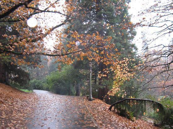 Laurelhurst Park: Paved trails