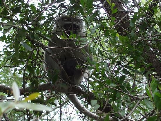 Hluhluwe, Sydafrika: a local at Sobenghu