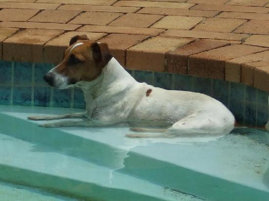 Hluhluwe, Sydafrika: Bullet, the gaurd-dog