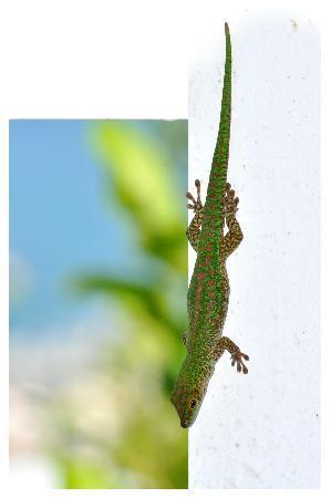 Le Sans Souci Guesthouse: Le Sans Souci Green Gecko