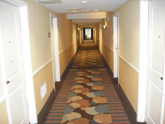 Hampton Inn Doylestown: Hallway