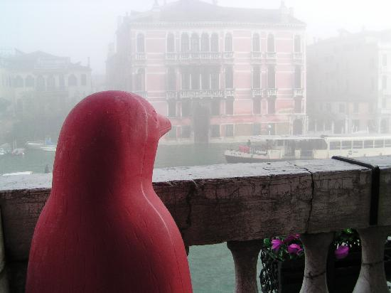 San Cassiano Residenza d'Epoca Ca' Favretto: Penguin on balcony overlooking Grand Canal