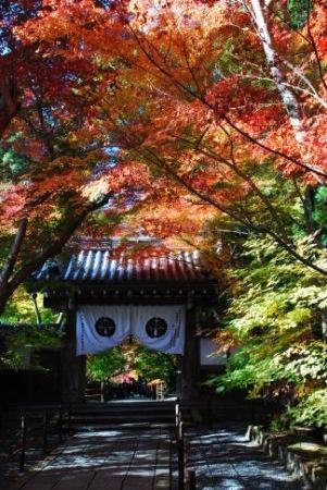 Nagaokakyo, Japan: 紅葉