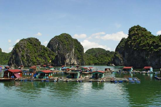 Fishing village in Cat Ba Island - Picture of Hai Phong ...
