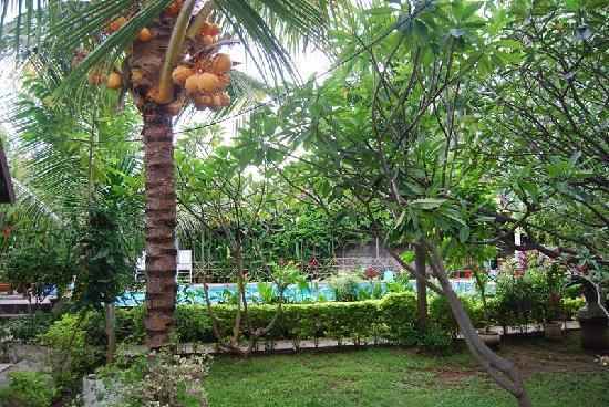 Mas Bungalows: het zwembad in de tuin