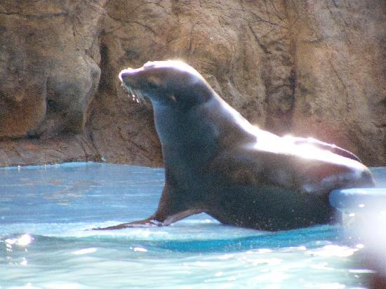 Acuario Mazatlan: Sea lion at the Acuario