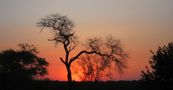 Kruger Nationalpark, Sydafrika: South African Sunset