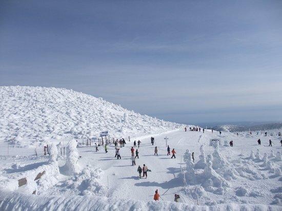 蔵王の樹氷群