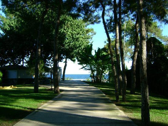 Mirada del Mar: green area