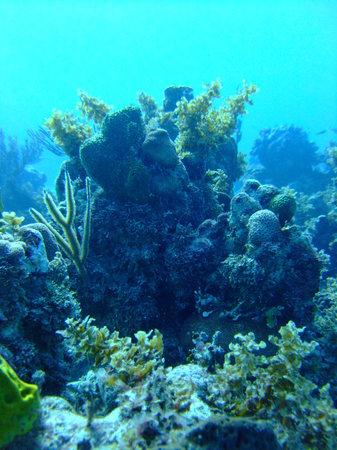 Dressel Divers: the reefs...