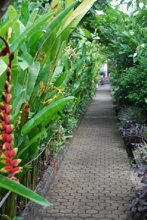 Mas Bungalows: Garten richtun Pool oder zimmer