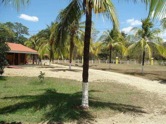 Hotel Paraje del Diria: Coco trees
