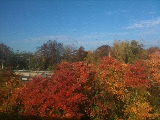 Quality Suites: Beautiful fall colors outside my window