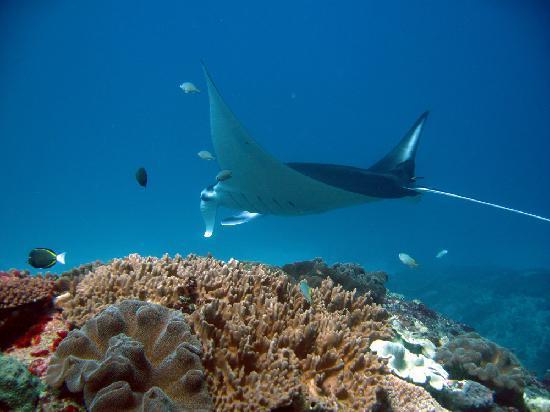 Big Fish Diving: manta point nusa lembongan 1