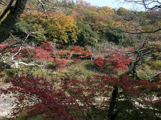 HOSHINOYA Kyoto: 部屋からは大人気のトロッコ列車が見られます!