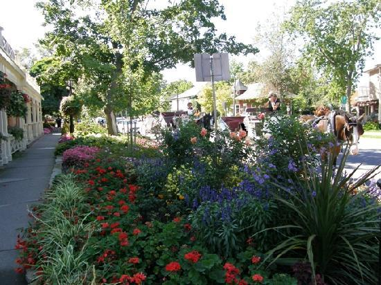 Historic Davy House B&B Inn: Flower lined streets in town