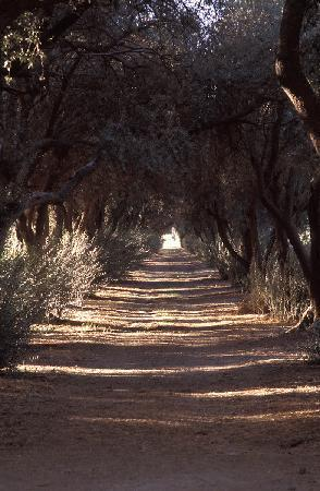 Highland Springs Resort and Conference Center: Olive Grove
