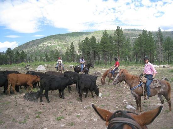 Wilderness Trails Ranch: Still some cowa left