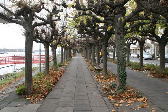 Drachenfelshotel: Rheinpromenade