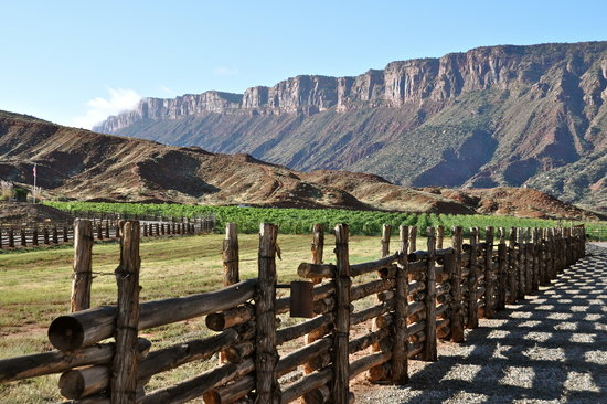 Red Cliffs Lodge: Castle Creek Vineyard
