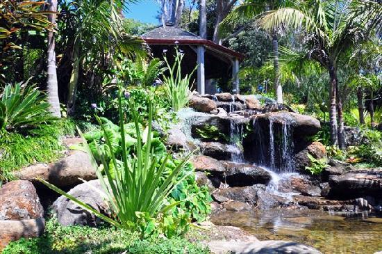 Sanctuary in the Cove: Garden waterfall