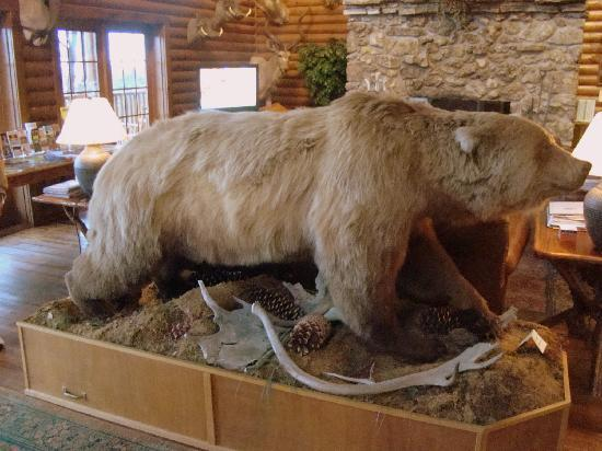 Village At Indian Point: Stuffed bear in main lodge.