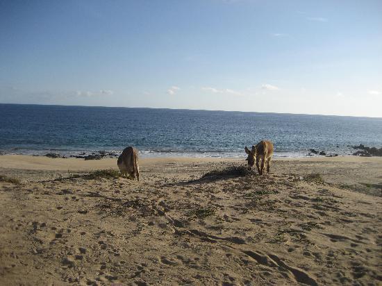 La Fonda del Mar Bed & Breakfast: beach