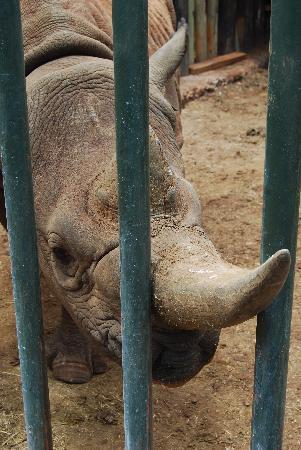 David Sheldrick Wildlife Trust : Shida