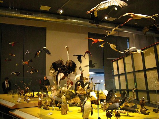 ‪National Museum of Natural History (Naturalis)‬