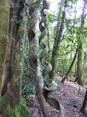 San Carlos, Costa Rica: Regenwald