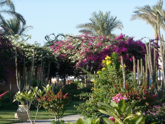 Iberotel Makadi Beach : Tropical garden