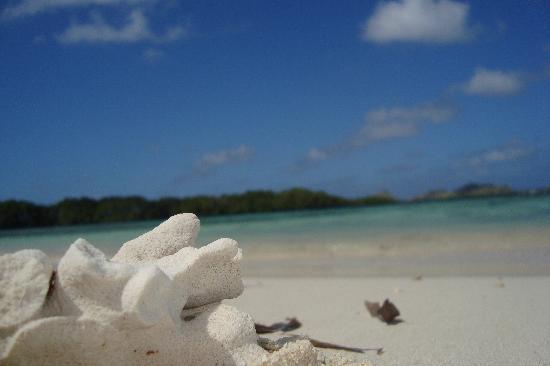 Posada La Cigala: sea shell