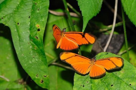 Hagia Sofia: Butterflies
