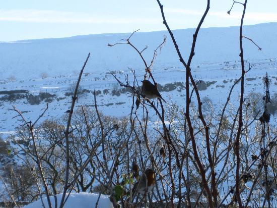 Croft Gate Bed and Breakfast: Snowy Ingleborough