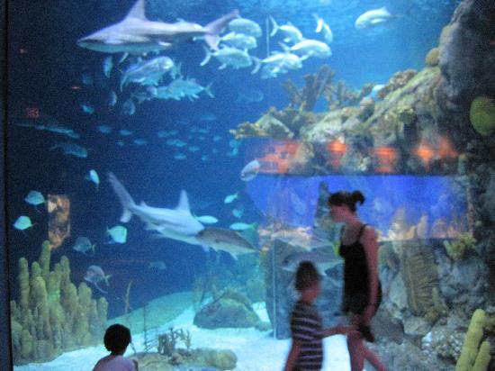 Henry Doorly Zoo: aquarium