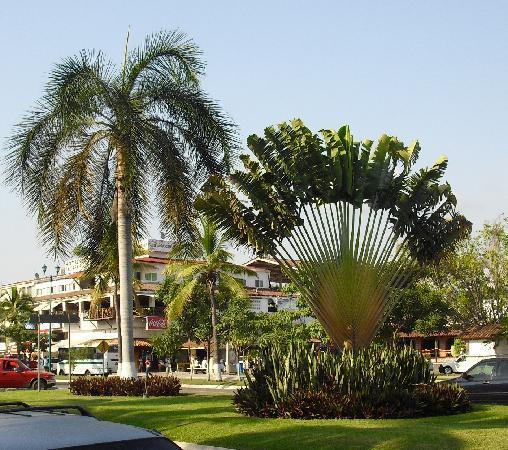 Tesoro Ixtapa: Beautfiul palms