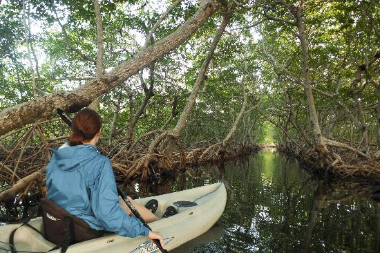 Castaways Cove: Mangrove canals