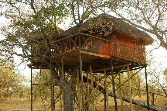 Pezulu Tree House Game Lodge: Jackelberry Baumhaus