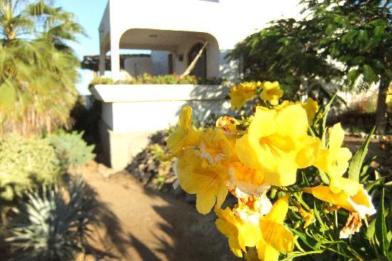 Flowers from the lovely gardens of the Casablanca.