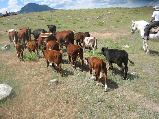 Klondike Ranch: Moving the herd