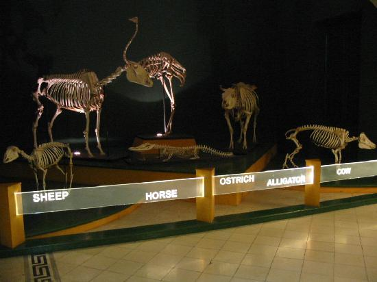 National Museum of Natural History : Squelette des animaux domestiques