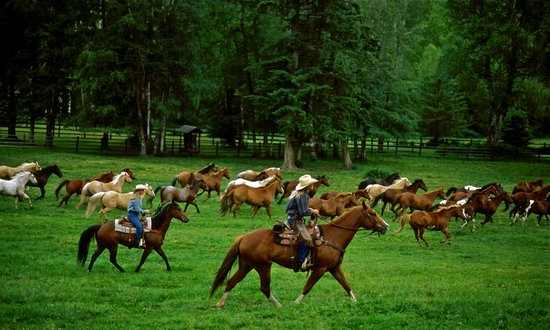 Averill's Flathead Lake Lodge: The Lodge horse herd