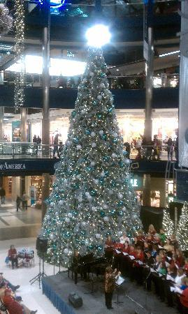 SpringHill Suites Minneapolis-St. Paul Airport/Mall of America: BIG tree at the Mall.