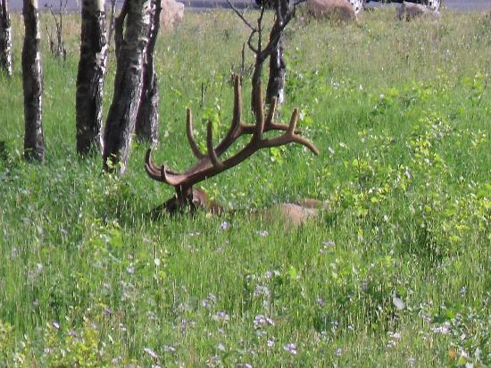 Denver, CO: Elk