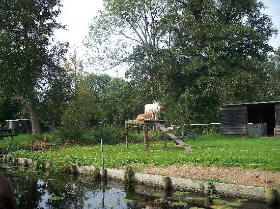‪‪Giethoorn‬, هولندا: The goats of Giethoorn‬