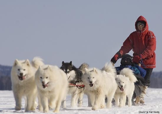 Dogsledding in North Dakota